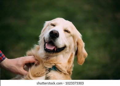 Close View Of Funny Young Happy Labrador Retriever. Smiling Dog.