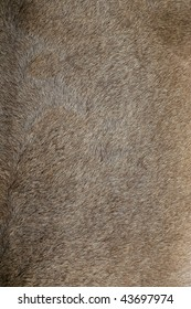 Close view of a fur from a capra ibex