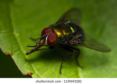 close up view of a greenbottle