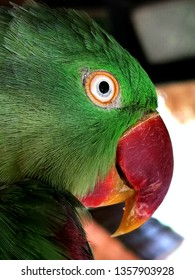 close up view of head of parrot
