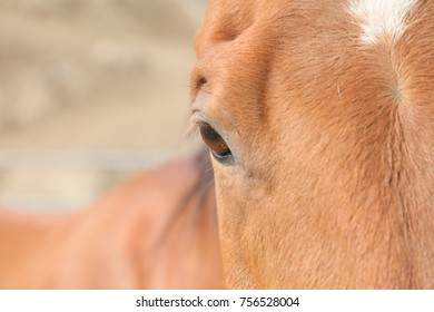 A close up view of a healthy eye of a horse.