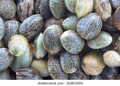 Close view of hemp seeds, macro photo