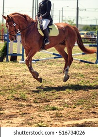 A close up view of a horse in competition race