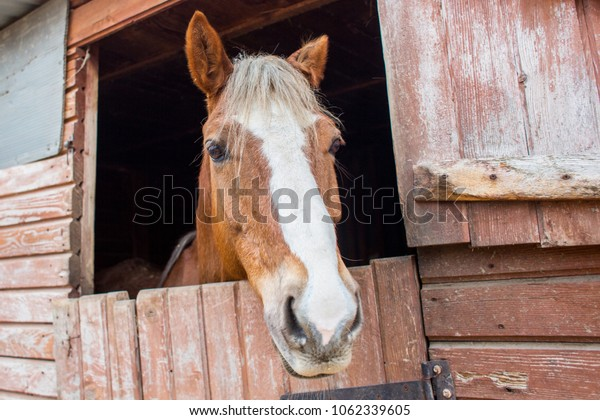 close up view of horse snout in the stall