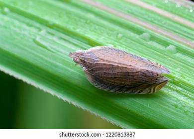 close up view of a leaf hopper on a green leaf