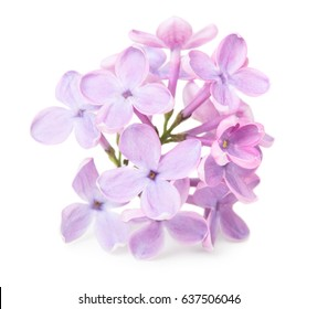 Close up view of lilac flower isolated on white background