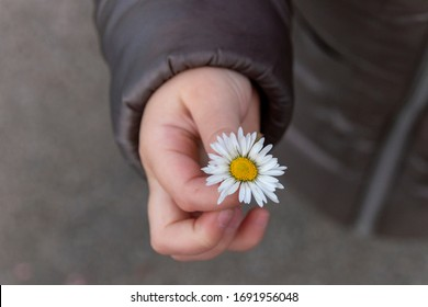 a close up view of a little girl holding a small white daisy on her closed hand