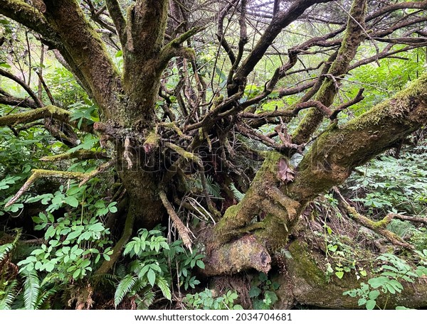 a close up view of old forest tree root lush foliage misty foggy morning due mist