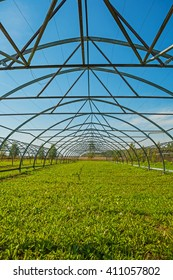 close up view on big empty opened greenhouse agricultural concept.
