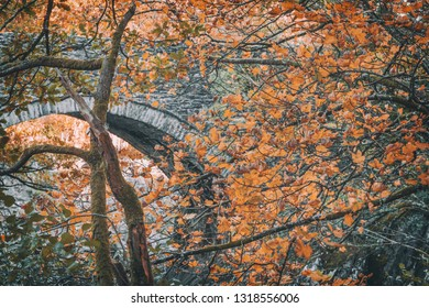 Close up view of orange maple leaves on branch against old stone bridge background. Snowdonia National Park in North Wales,UK