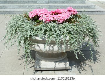 The close view of an outdoor flowerpot in Warsaw downtown (Poland).