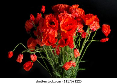 Close up view of poppy flowers