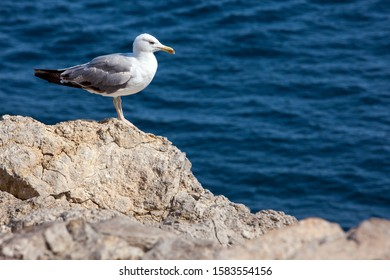 Close up view of Seagull portrait against sea shore. A white bird sitting on a rock by the beach. natural blue water background.