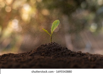 Close up view of seedlings planted in the soil And there is water droplets in the air. The concept of growing plants in nature