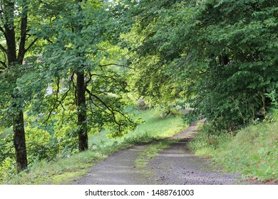 Close up view of a small french road in the countryside with many trees on each side. Green foliage and dark trunks visible. Way of light among the forest. Natural picture.
