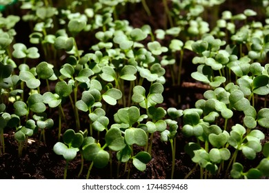 Close view of small young sprouts