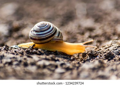 Close up view of snail crawling on ground