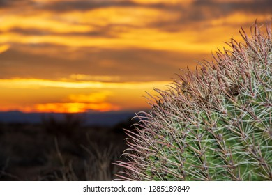A close up view of a southwestern Barrel Cactus with a beautiful New Mexico sunset in the background