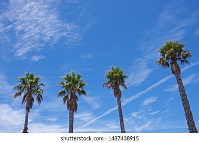 Close view of the top of four tall California fan palms with bright blue sky and some vivid cloud traces behind