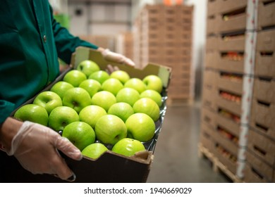Close up view of unrecognizable worker holding crate full of green apples in organic food factory warehouse.