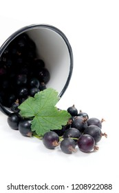 Close up view of white cup with black currant berry isolated on white background. A white cup with black currant berry and small bunch of black currant with green leaf of currant bush in front of cup.
