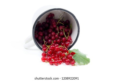 Close up view of white cup with red currant berry isolated on white background. A white cup with red currant berry and small bunch of currant with small green leaf of currant bush in front of cup.