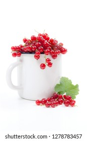 Close up view of white cup with red currant berry isolated on white background. A white cup with red currant berry and small bunch of red currant with small green leaf of currant bush