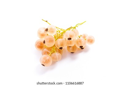 Close up view of white currant berry isolated on white background.
