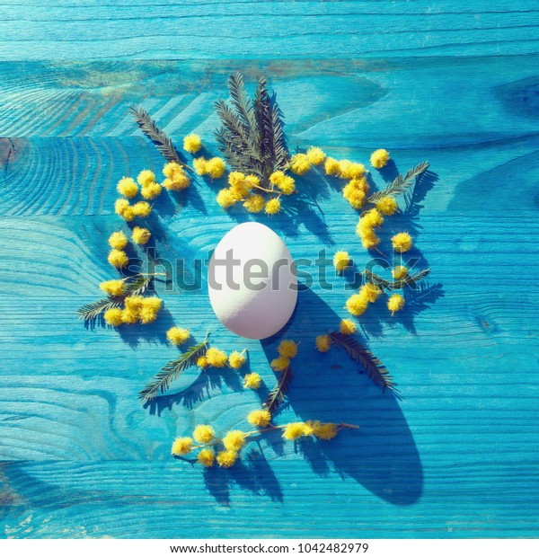 close up view of white egg in heart shaped mimosa flowers on blue wooden background
