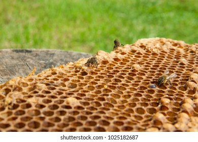 Close up view of the working bee on the honeycomb with sweet honey. Piece of yellow honeycomb from beehive with sweet honey on the vintage wooden background. Bee honey collected in honeycomb.