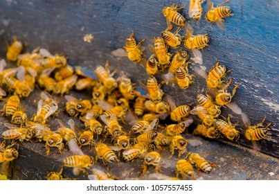 Close up view of the working bees, close to a comb and working bees