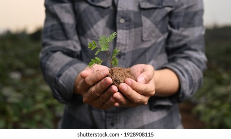 Close up view of young farmer holding a green young plant.