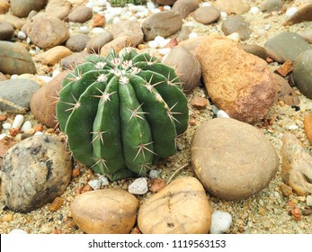 Close view of a young saguaro cactus in the southern Arizona Sonoran Desert on a sunny day