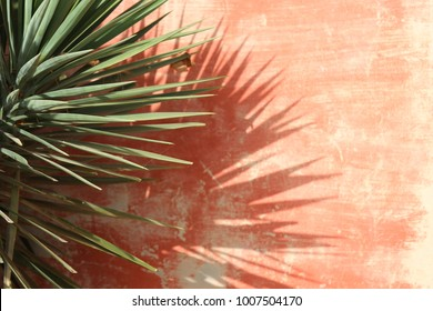 Close up view of yucca long green leaves in front of an old pink wall. Shadows of the leaves on the surface of the wall. Natural pastel abstract view taken at goree island senegal during a sunny day.