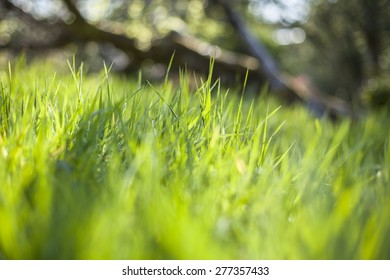 Close up of vivid green grass in the sun. Focus is in the middle of the photo, most of the pic is out of focus
