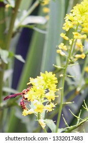close up of wasp on yellow flower with green leaves in the background