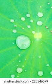 close up water drop on Lotus leaf
