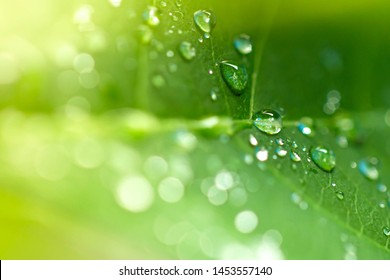 Close up water drops on fresh green leaf.Selective focus