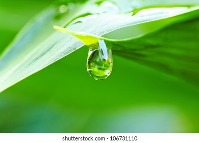 Close up of a water drops on leaves