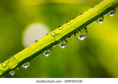 Close up of water drops. Sunlight is reflected in droplets. The background is green.