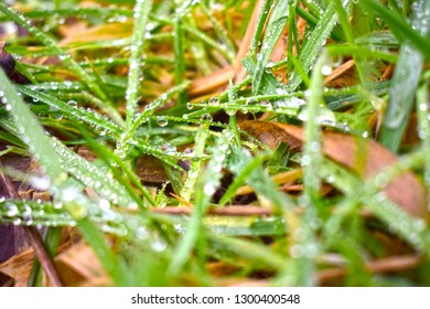 close up of water/dew on grass