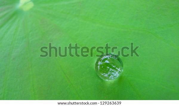 Close up waterdrop on lotus leaf