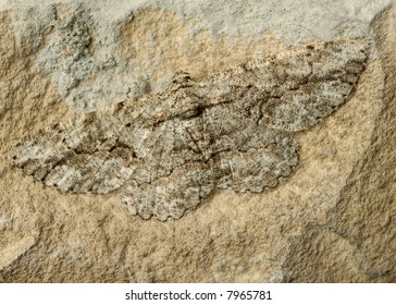Close up of well-camouflaged moth on a rock