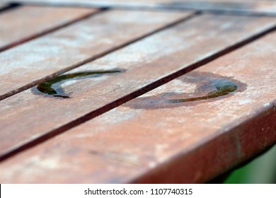 Close up of a wet cup ring - water on a wooden picnic table