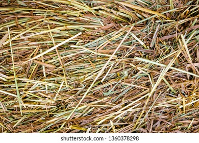 Close up of wet yellow, green and brown grass after rain. Abstract nature background