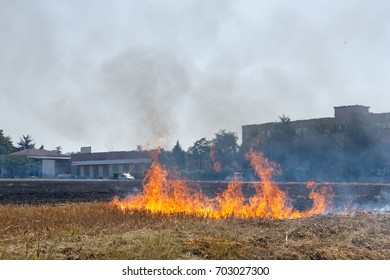 Close to a Wheat field in flames Blackened and completely burnt