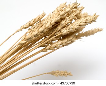 close up of wheat nice detail background, isolated
