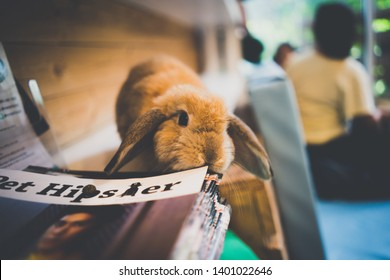 Close up white baby rabbits on coffee cafe background for children to feed animals. Short hair baby rabbit, Beautiful easter bunny rabbit use for easter holiday concept. Bangkok, Thailand. May, 2019
