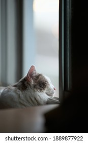 Close up of white cat sleeping beside the window with its head out