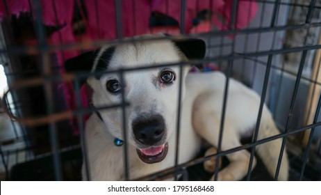 Close up White dog in crate